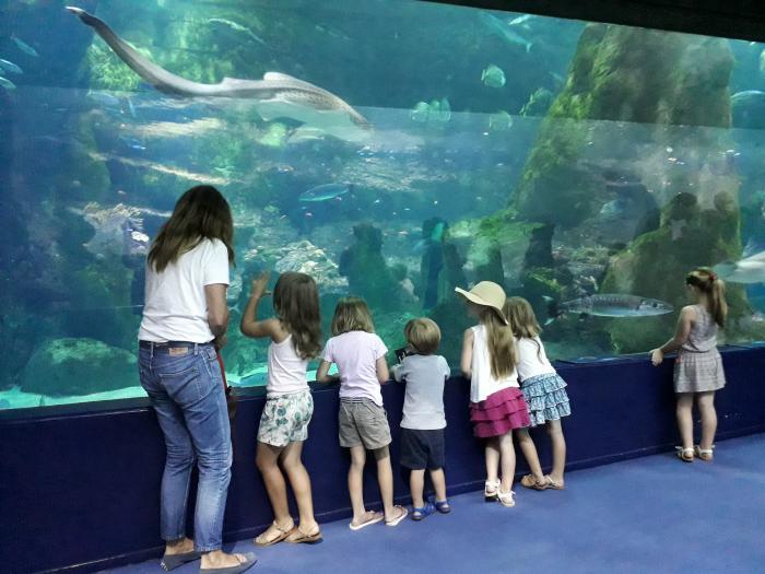 Avec Xabi, l'Aquarium musée de la mer se visite aussi en basque