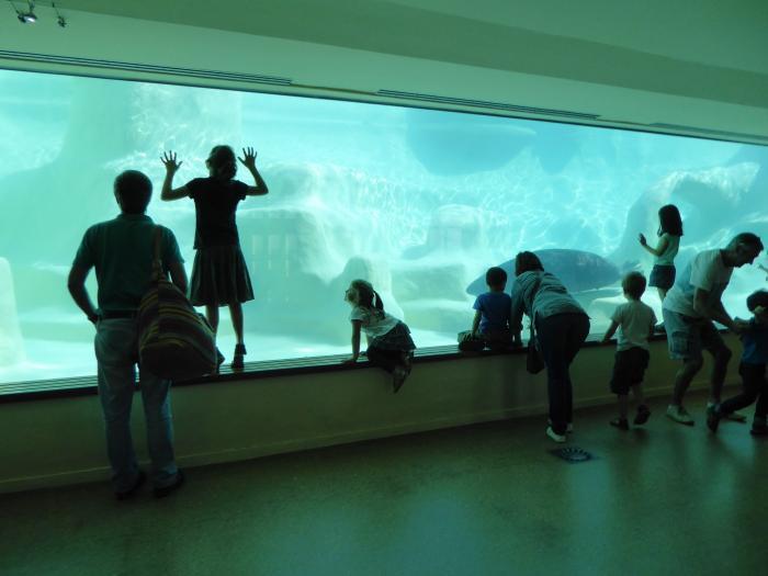 Visite de l'Aquarium de Biarritz